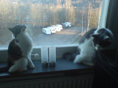 Nisse och Freja igen