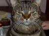 Mammas katt Stina