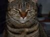 Katten Stina igen