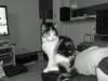 Kl: 16:00 - Sitter och tittar tv och Freja håller oss sällskap.