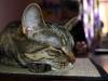 Stina 2012-04-09