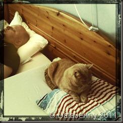 Kl: 14:00 - Håller på att byta sängkläder och få besök av Pedro som hellre vill att jag ska umgås med honom, när pappa ligger och sover.