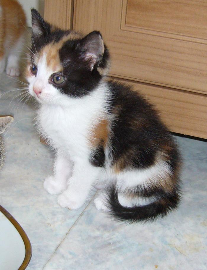 Freja, våran nya kattunge som vi får hämta om fyra veckor. Längtar så himla mycket