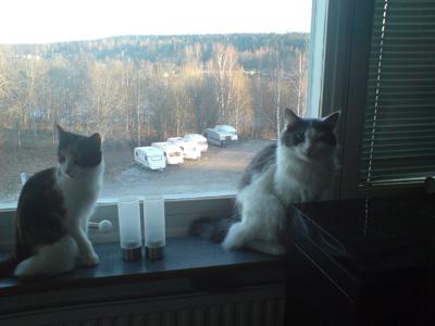 Nisse och Freja