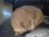 Kl: 13:00 Pedro ligger och sover brevid mig i soffan.